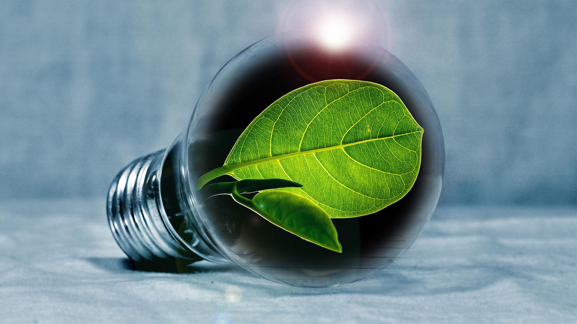 Pran green energy energia verde